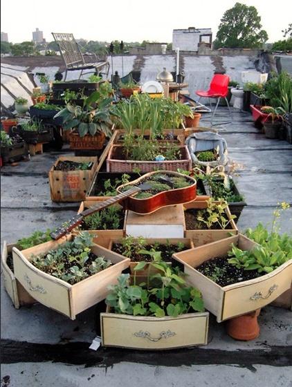 Community garden2