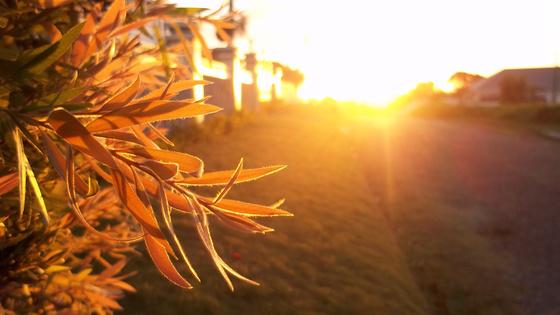 robinn25: Soft Golden Leaf