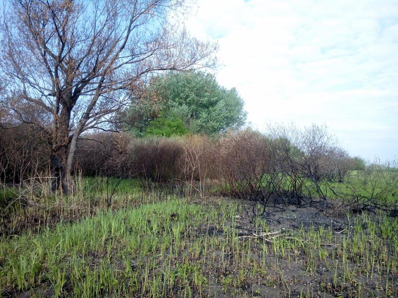 És úgy néz ki a tüzet nagyon szeretjük. Természetvédelmileg nagyon-nagyon óvatosan tudom csak azt elképzelni hogy a tűzzel való kezelés pozitív tud lenni. Egyfelől ne akkor amikor már levelesek a fák és a bokrok... Tehát tüzet csak március közepe előtt. Másfelől ha olyan helyet égetünk le ahol utána nem fogunk kezelni más módon (legeltetés, kaszálás akkor inkább ne is tegyük... nem olyan jó a tűz mint hisszük)