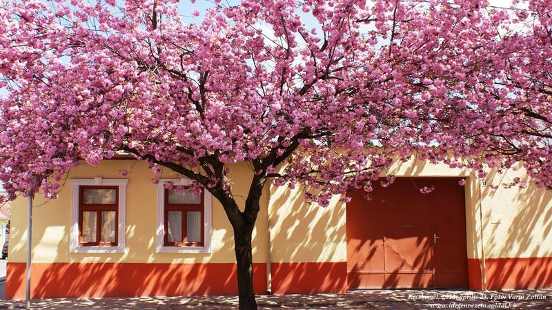 tourista: Kecskemét - 2013 tavasz
