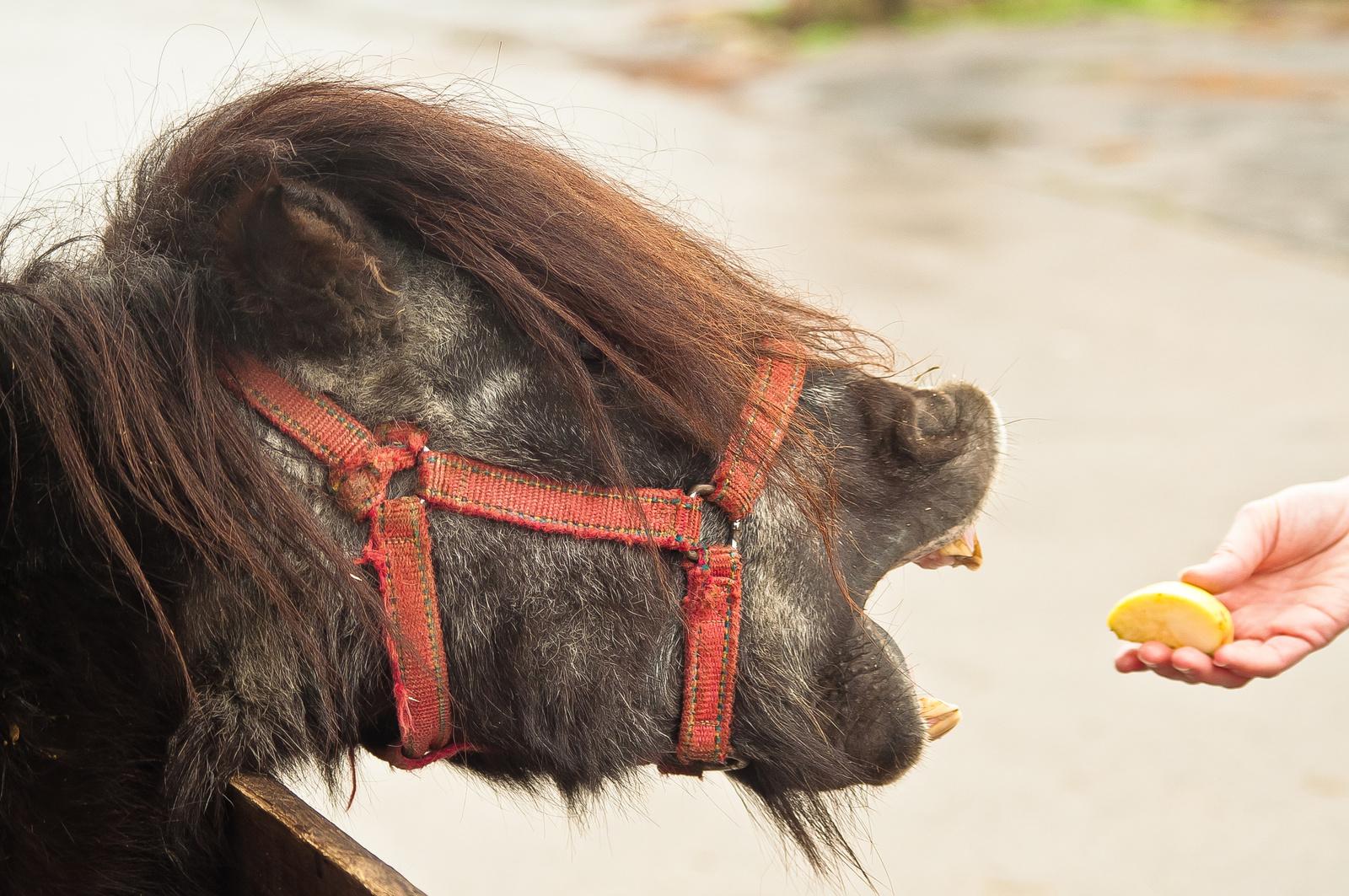 Ha nincs szamár, jó a ló is.
