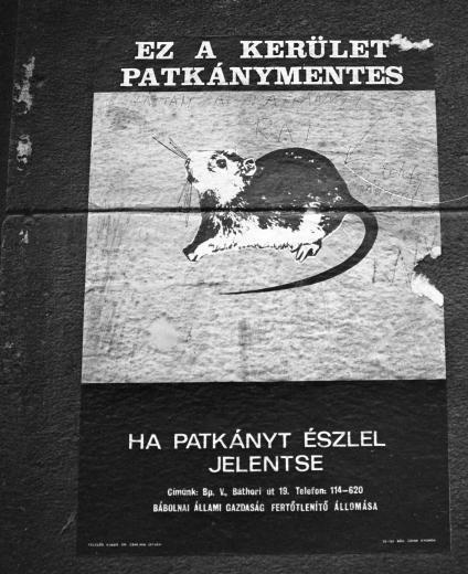 fovarosi.blog.hu: Patkanymentes-1970esEvek-Fortepan.hu-15891