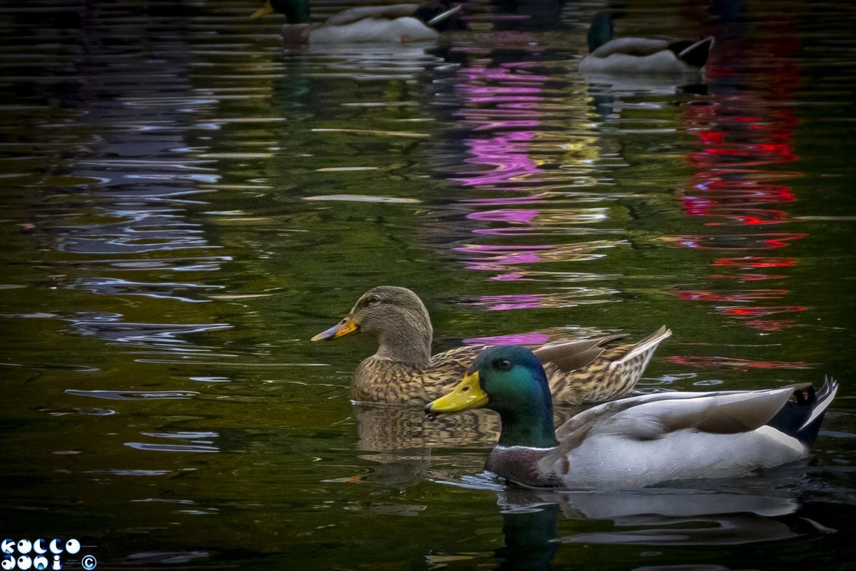 Úszunk a színvilágban...