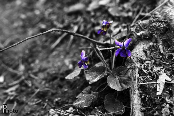 DIphoto: Ibolya