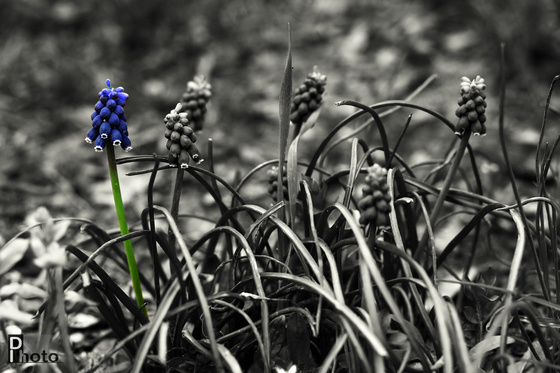 DIphoto: Gyöngyike