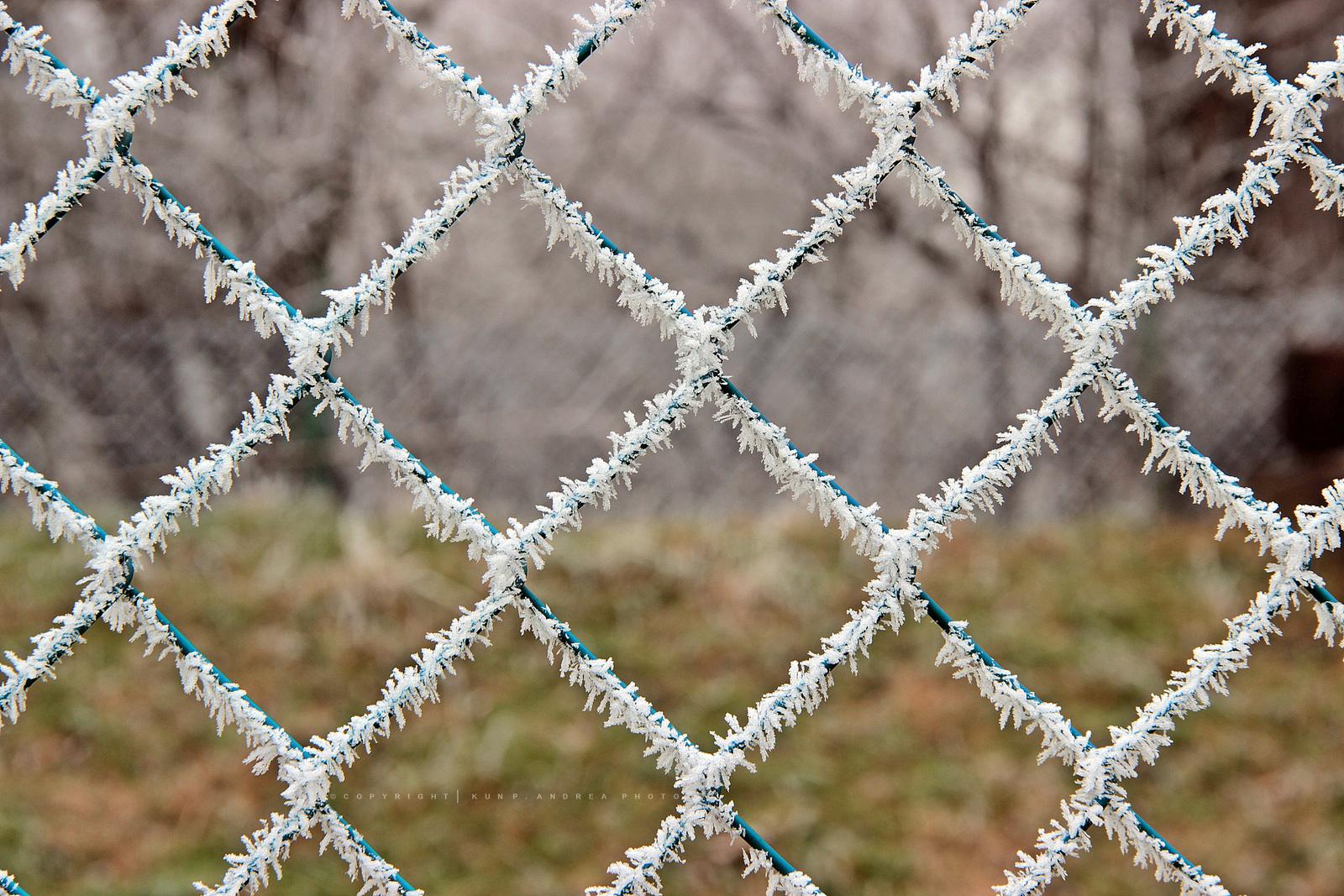 Természet alkotta szöges kerítés