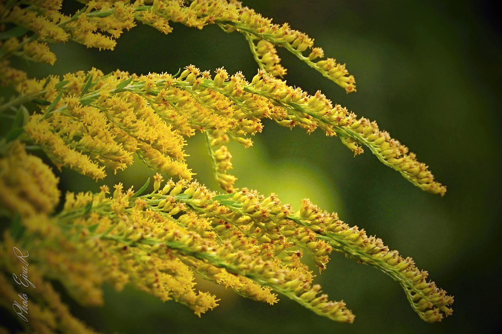 Virág Ősz Sárga