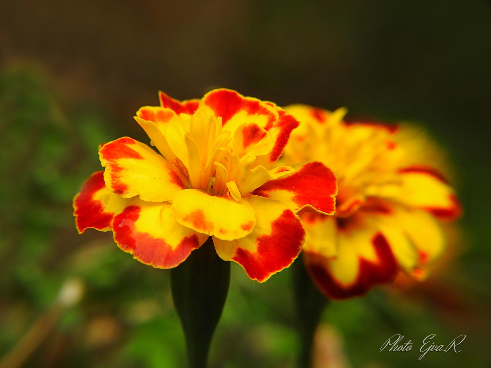 Virágok Ősz