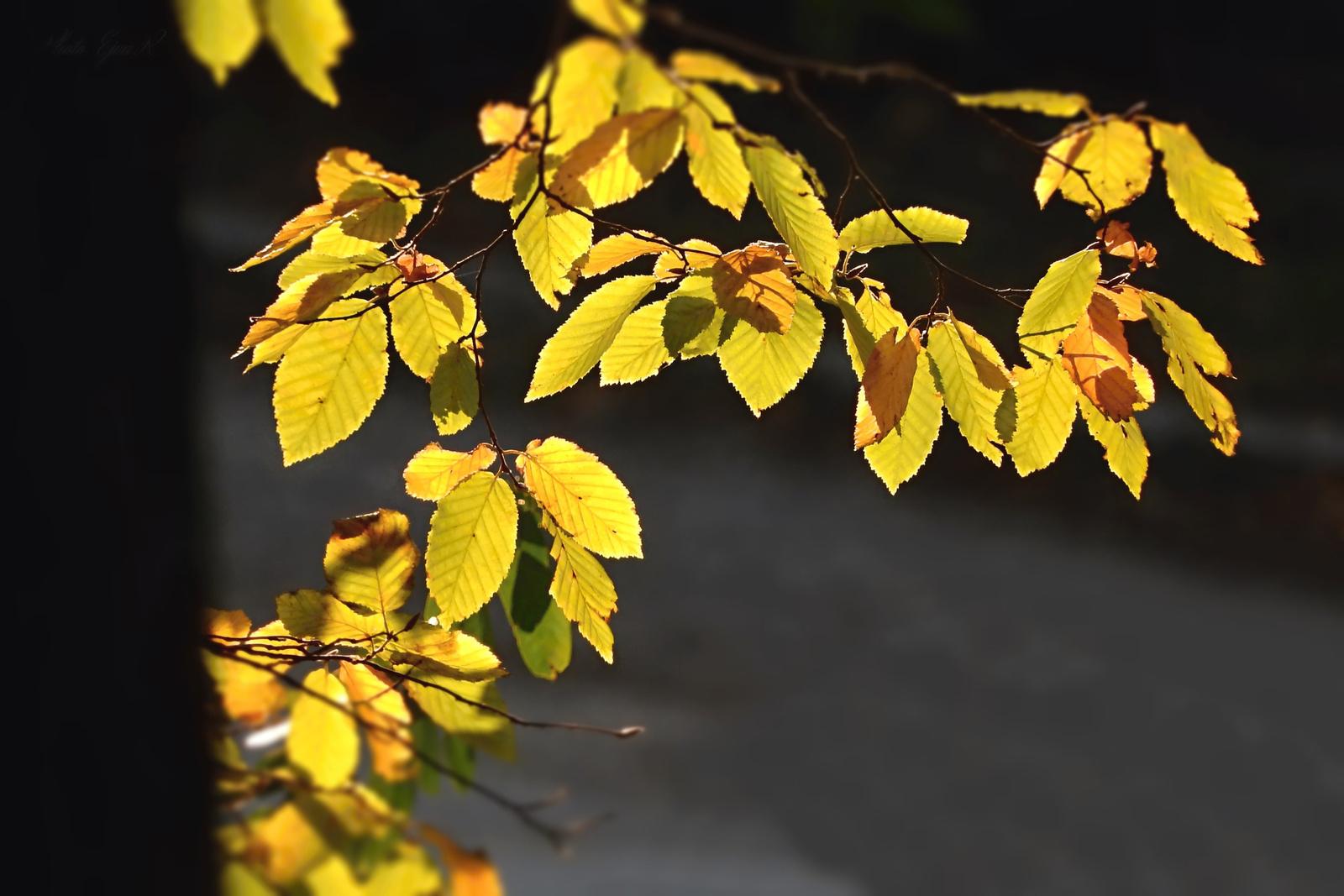 Színes levelek Ősz