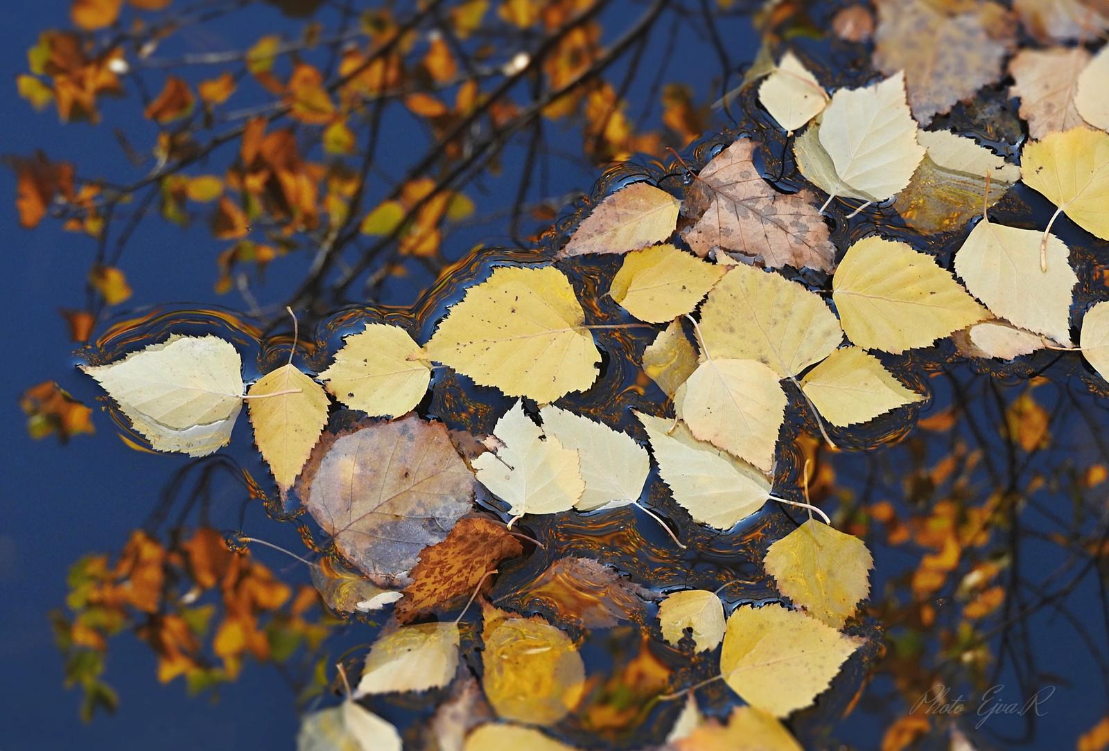 Víztükör Ősz