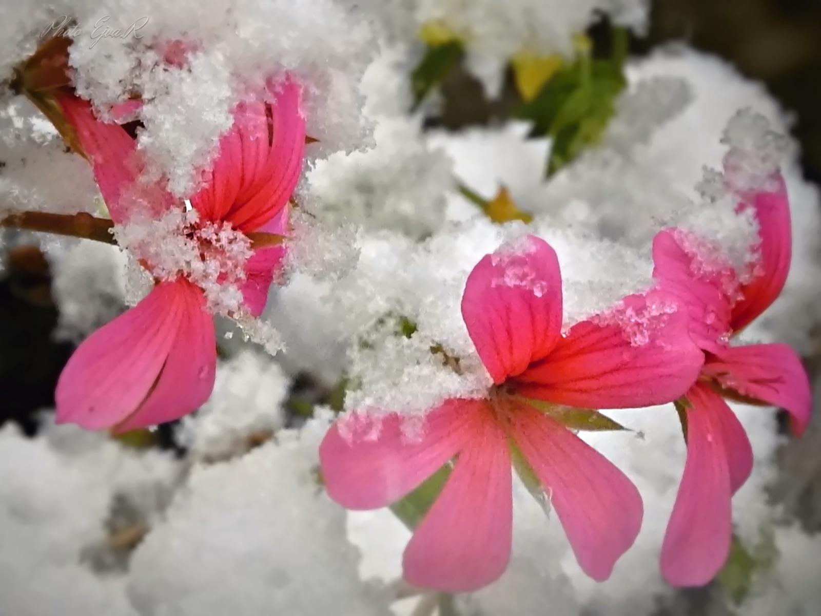 Havazás Virág Ősz
