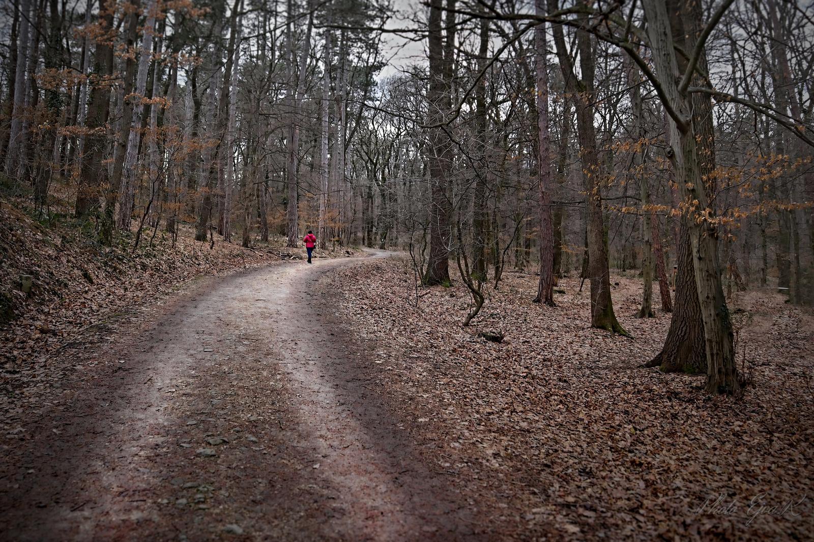 Erdő Tél