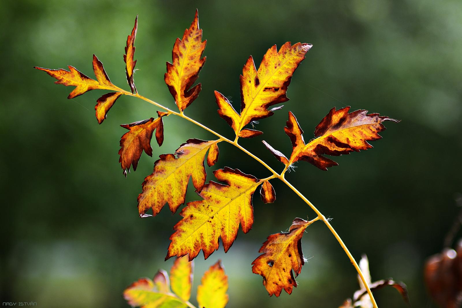 Autumn Leaves 0059