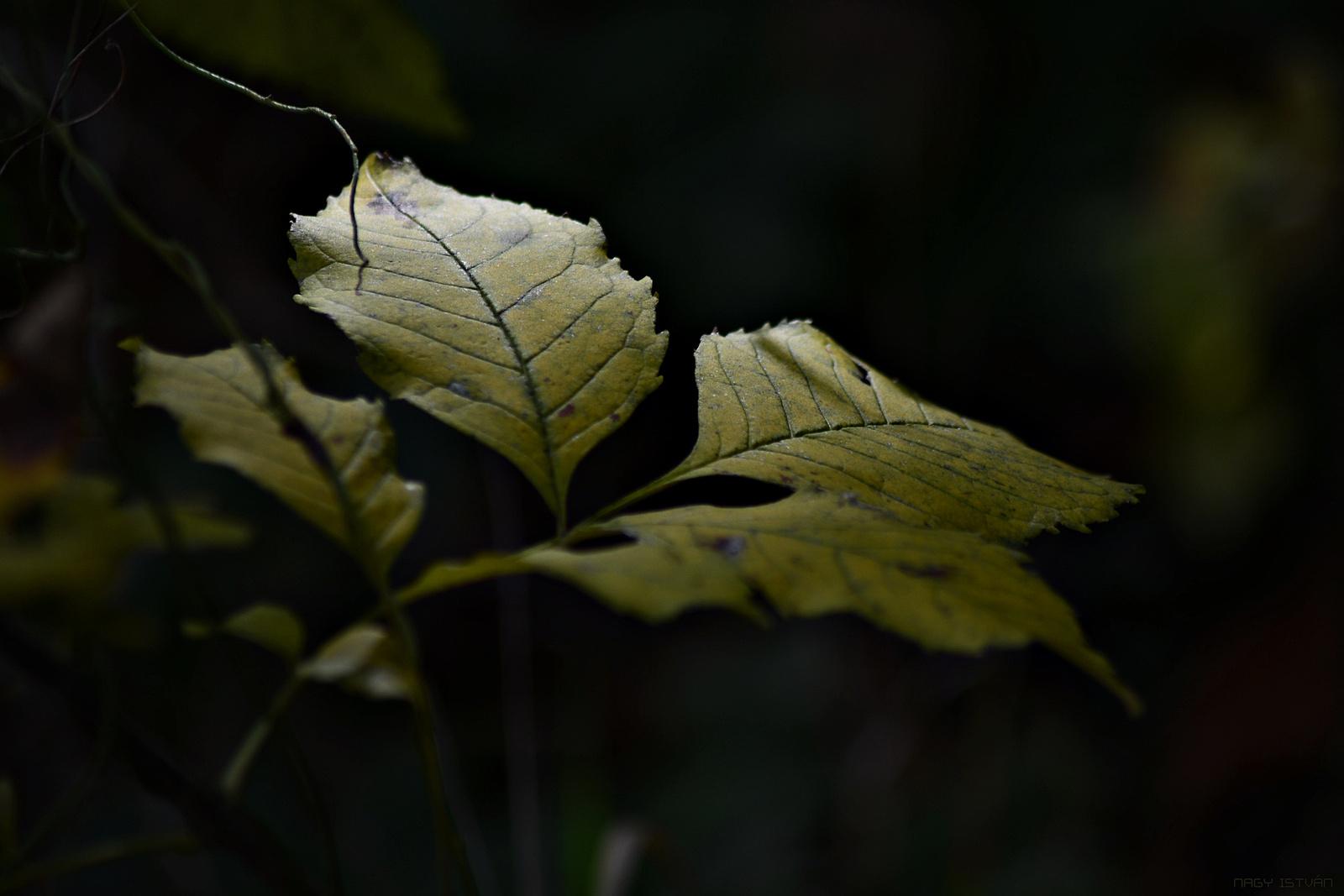 Autumn Leaves 0213