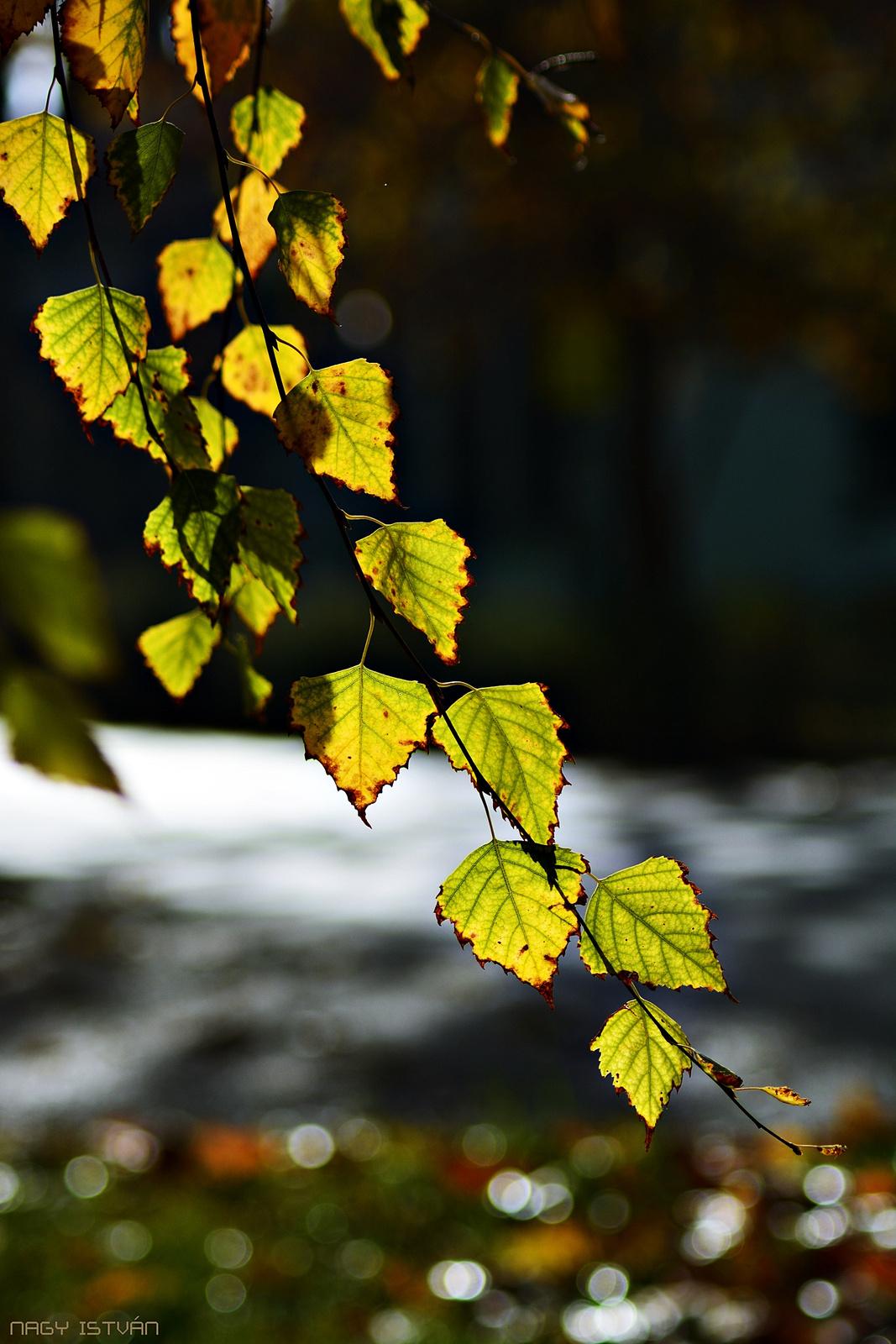 Autumn Leaves 0013