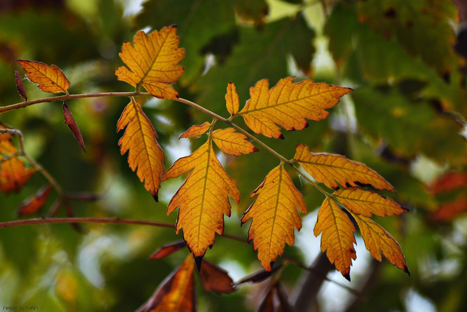 Autumn Leaves 0084