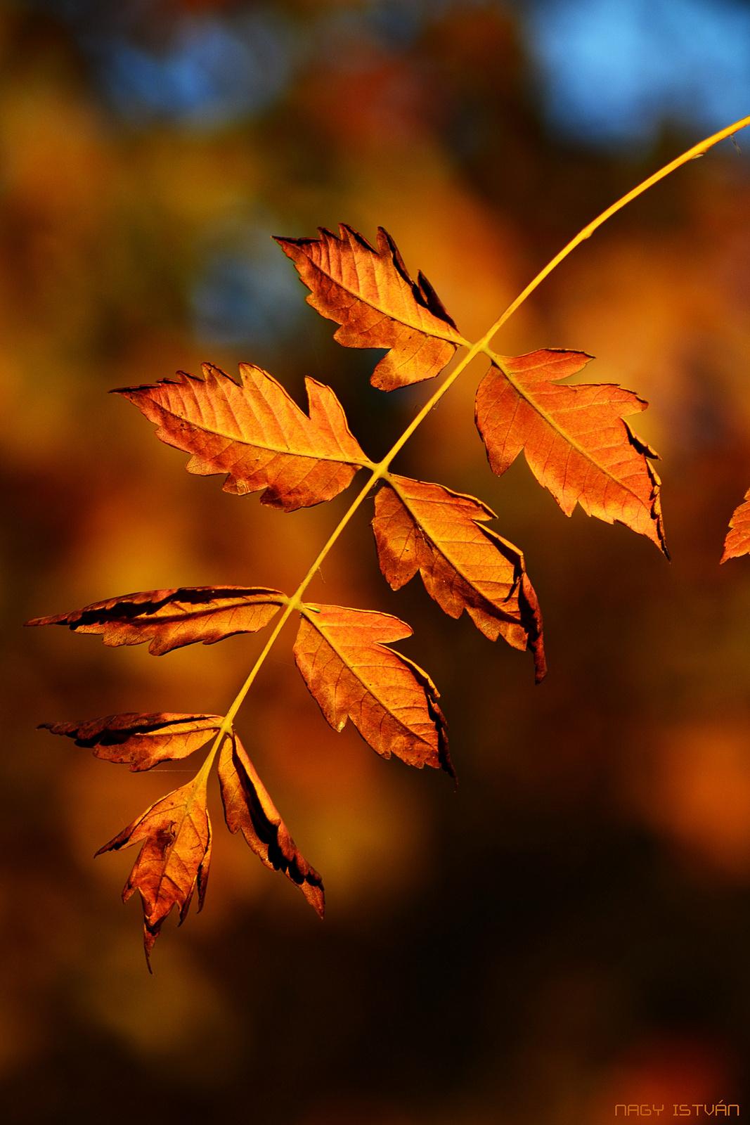 Autumn Leaves 0337