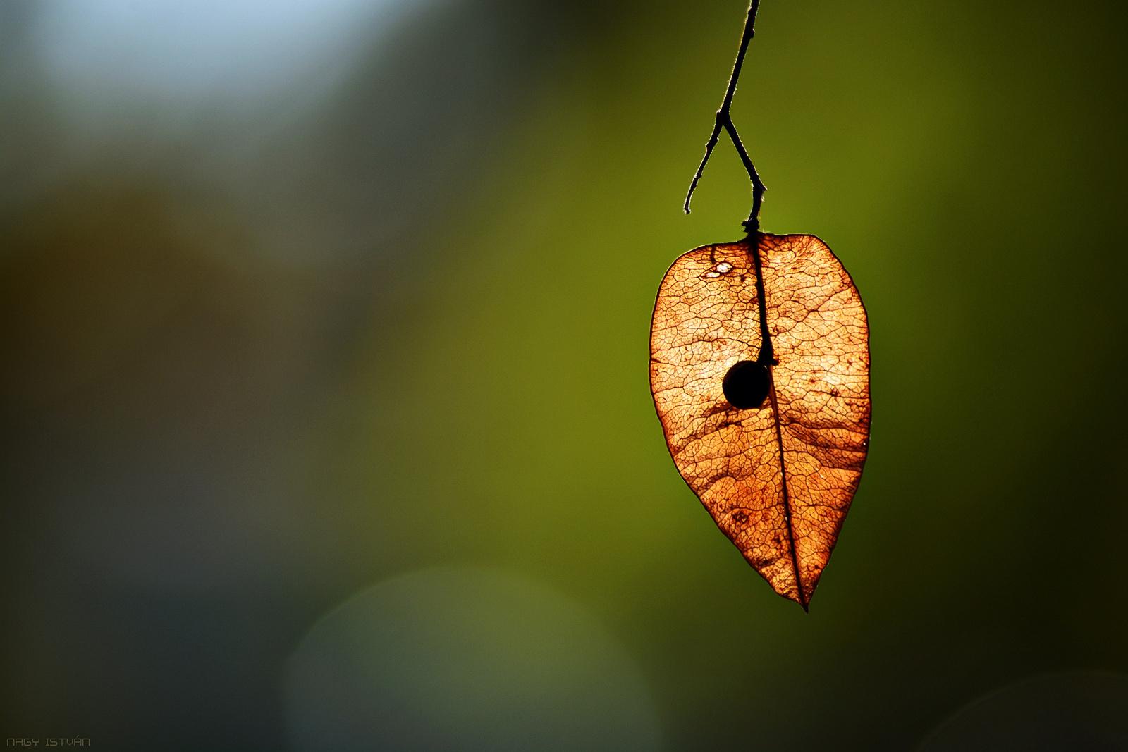 Autumn 0131