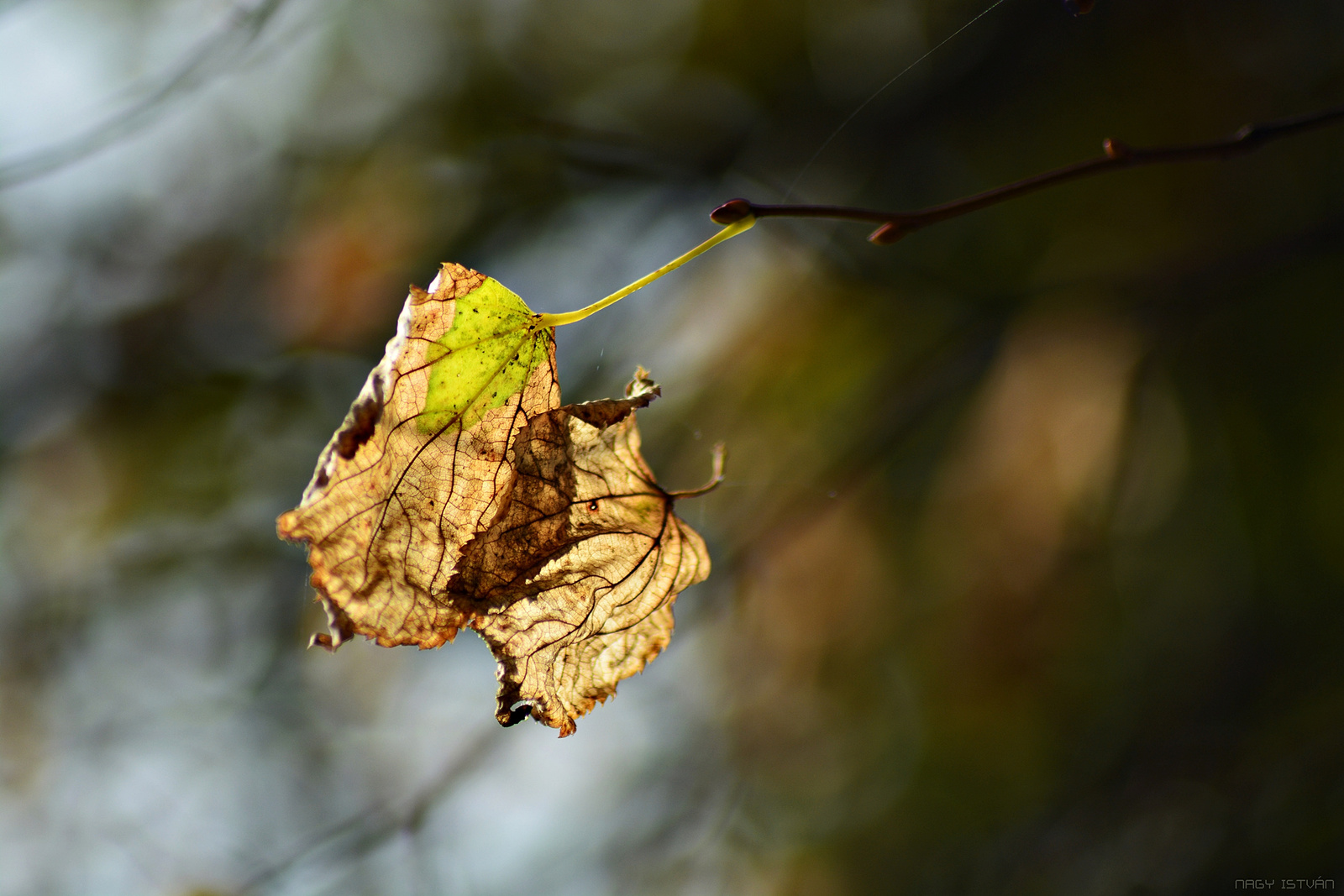 Autumn Leaves 0161