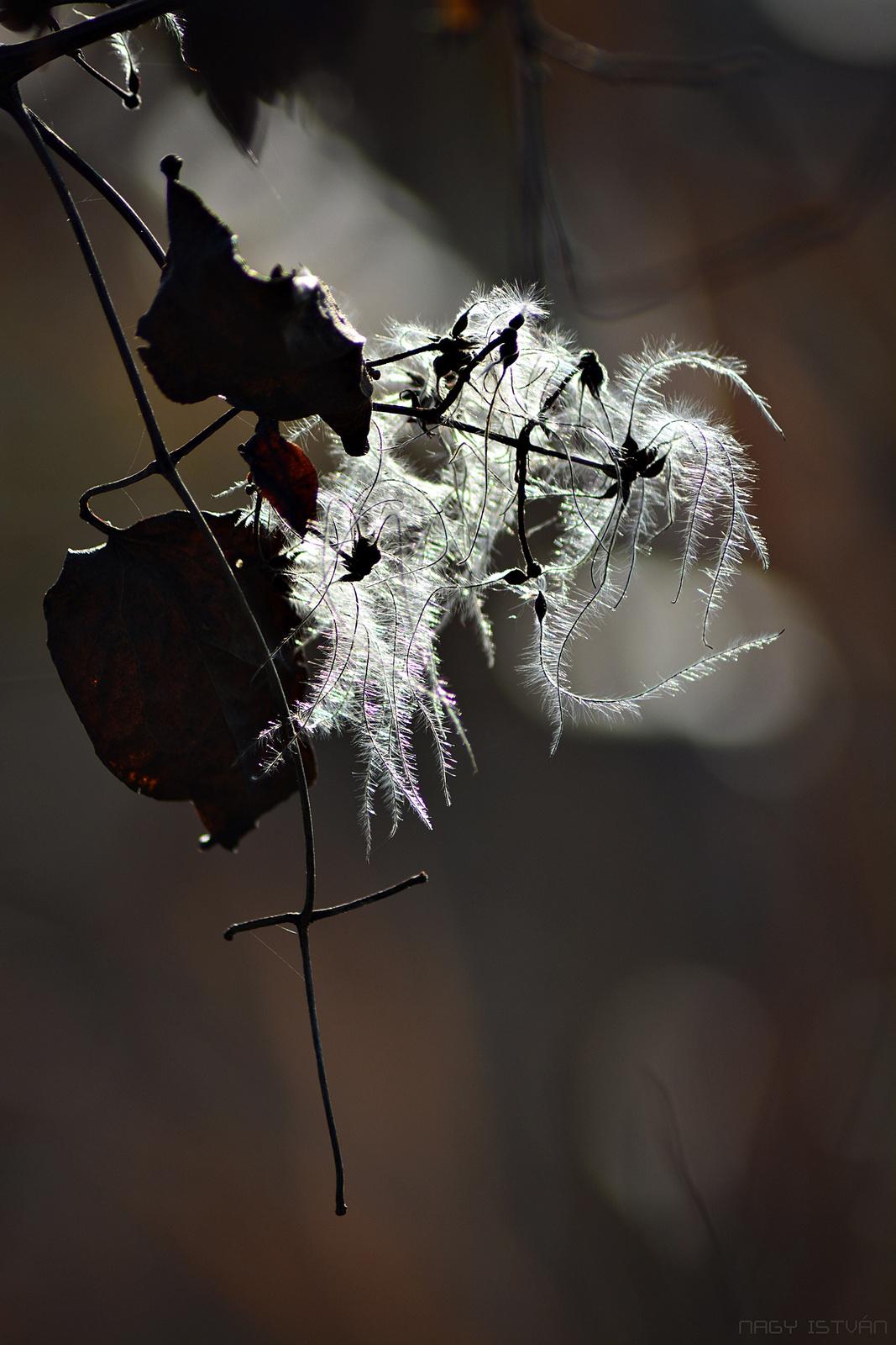 Autumn 0071