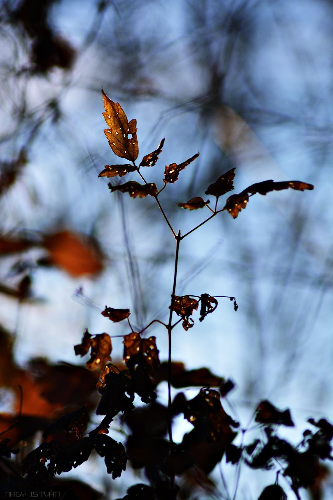 Autumn Leaves 0173