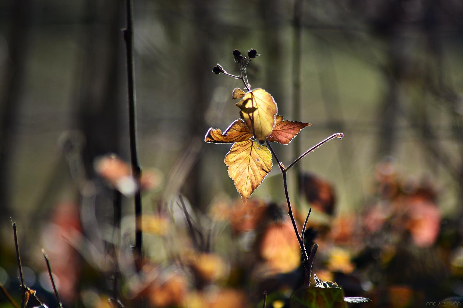 Autumn Leaves 0032