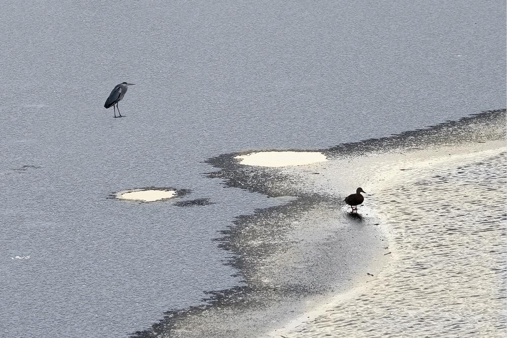 madarak a jégen