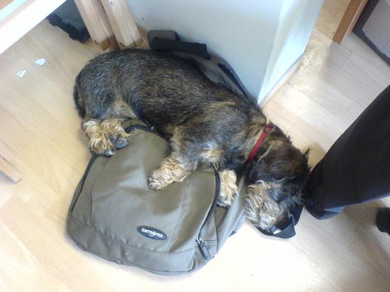 panic: Kifli alszik 3.