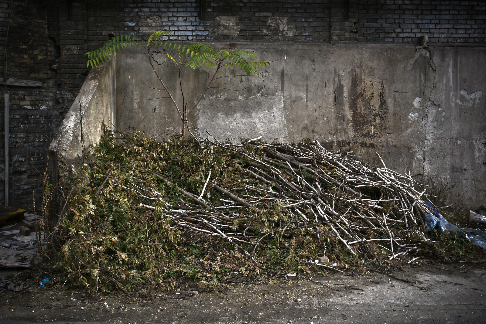 Csepel Művek 2008 - Birton Szabolcs - szabadfoglalkozású