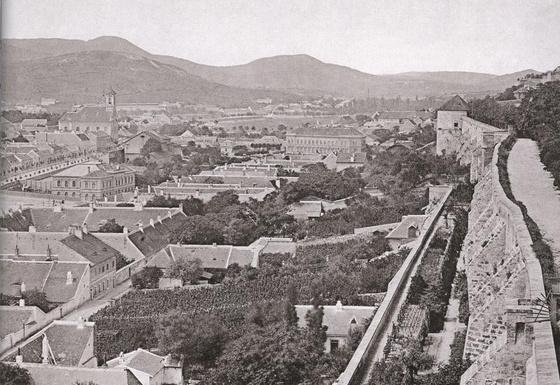 Szőlő Budán 1884