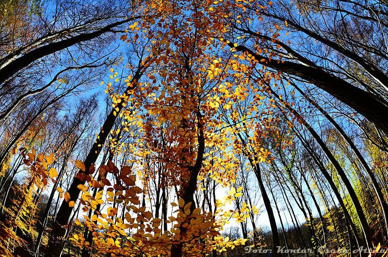 Kontiki: erdő kápolna - indafoto.hu