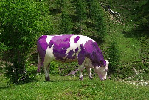 """Képtalálat a következőre: """"milka tehén"""""""