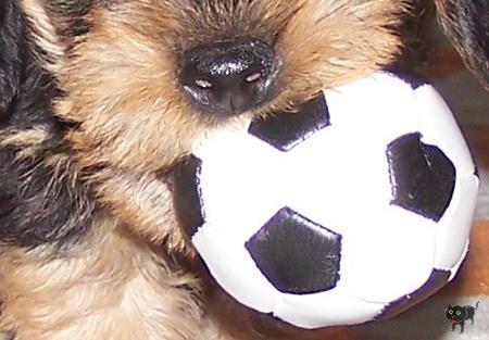 geszter: labdaval