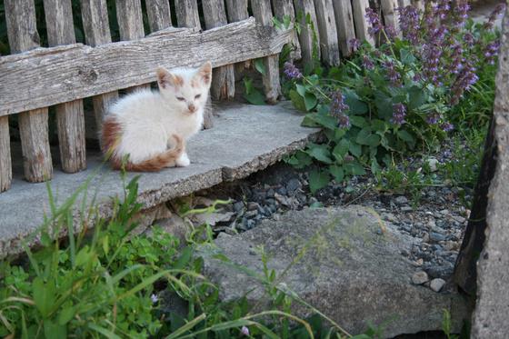 Monty: Erdely 2007.07.07 Korosfo Monty05