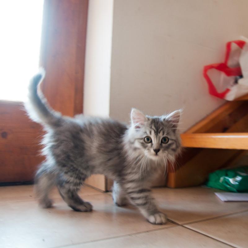 Vácdukai cicák-2