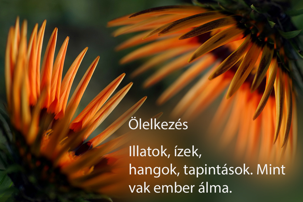 haikuk 42