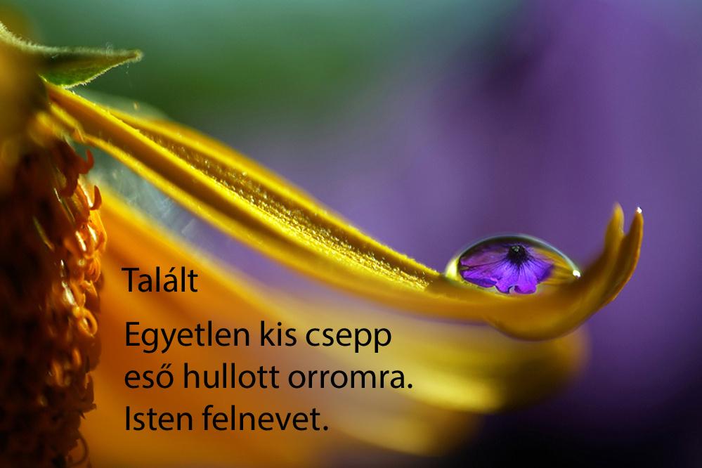 haikuk 56