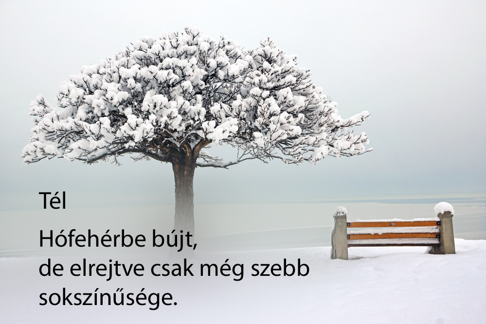 haikuk 62
