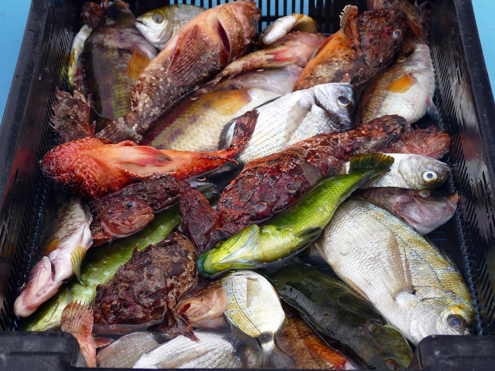 Costa - Marseille Kikötő halak