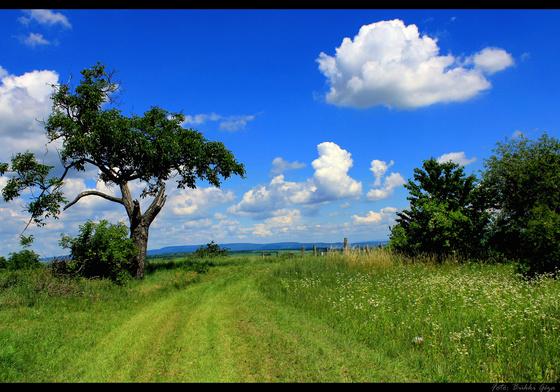 bukkig: Viharvert fa nyara