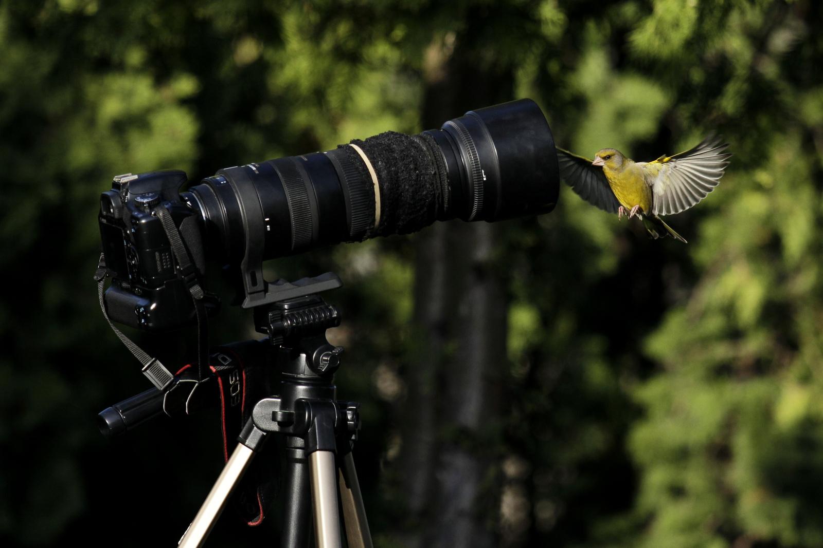 scherer: Fotómodell - indafoto.hu