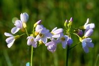 10 Virágok a hegyen