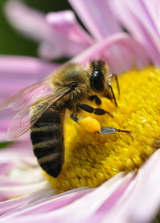 Méhek színek - 4