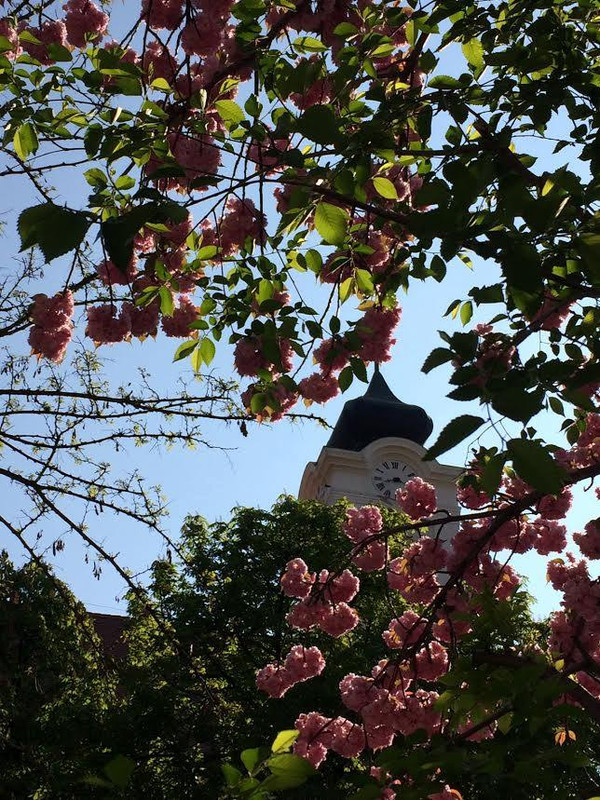 Budaörs - Kőhegy - Tavasz