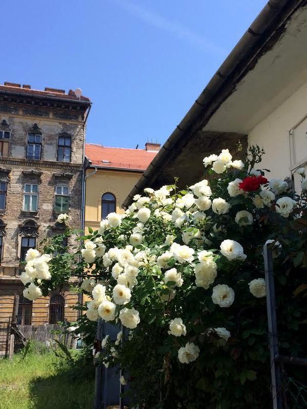 Virágos udvar