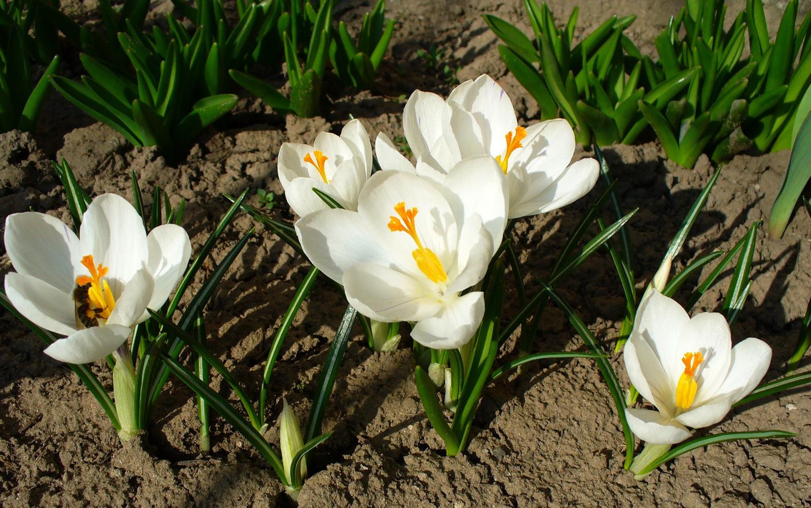 Tavasz-csalogató