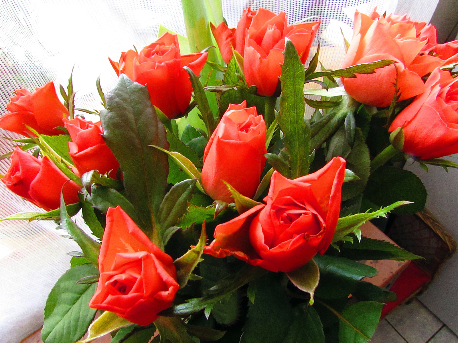 rózsák II.