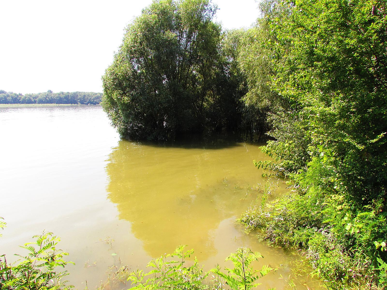 vízben a fák