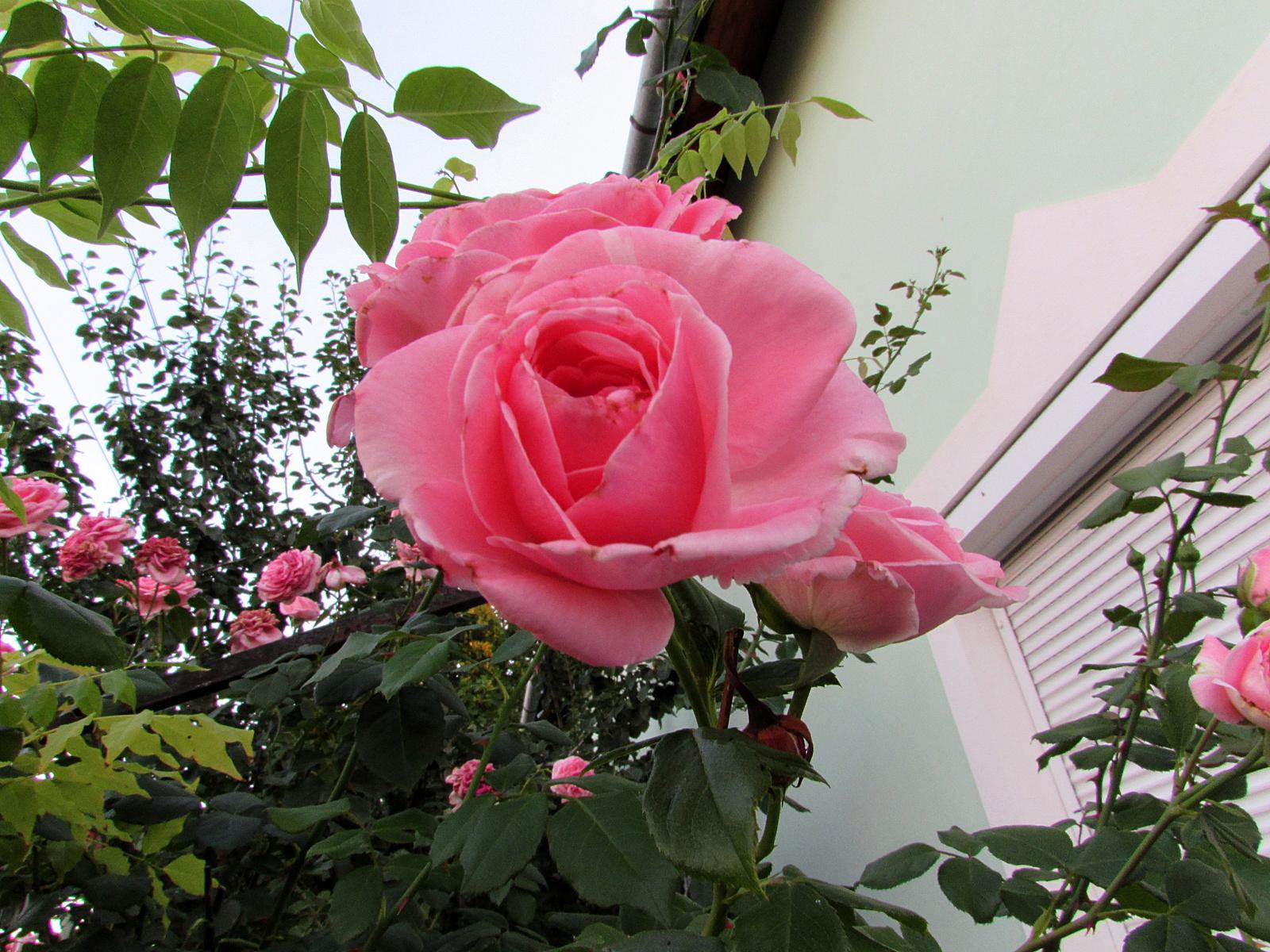 újból virágzik