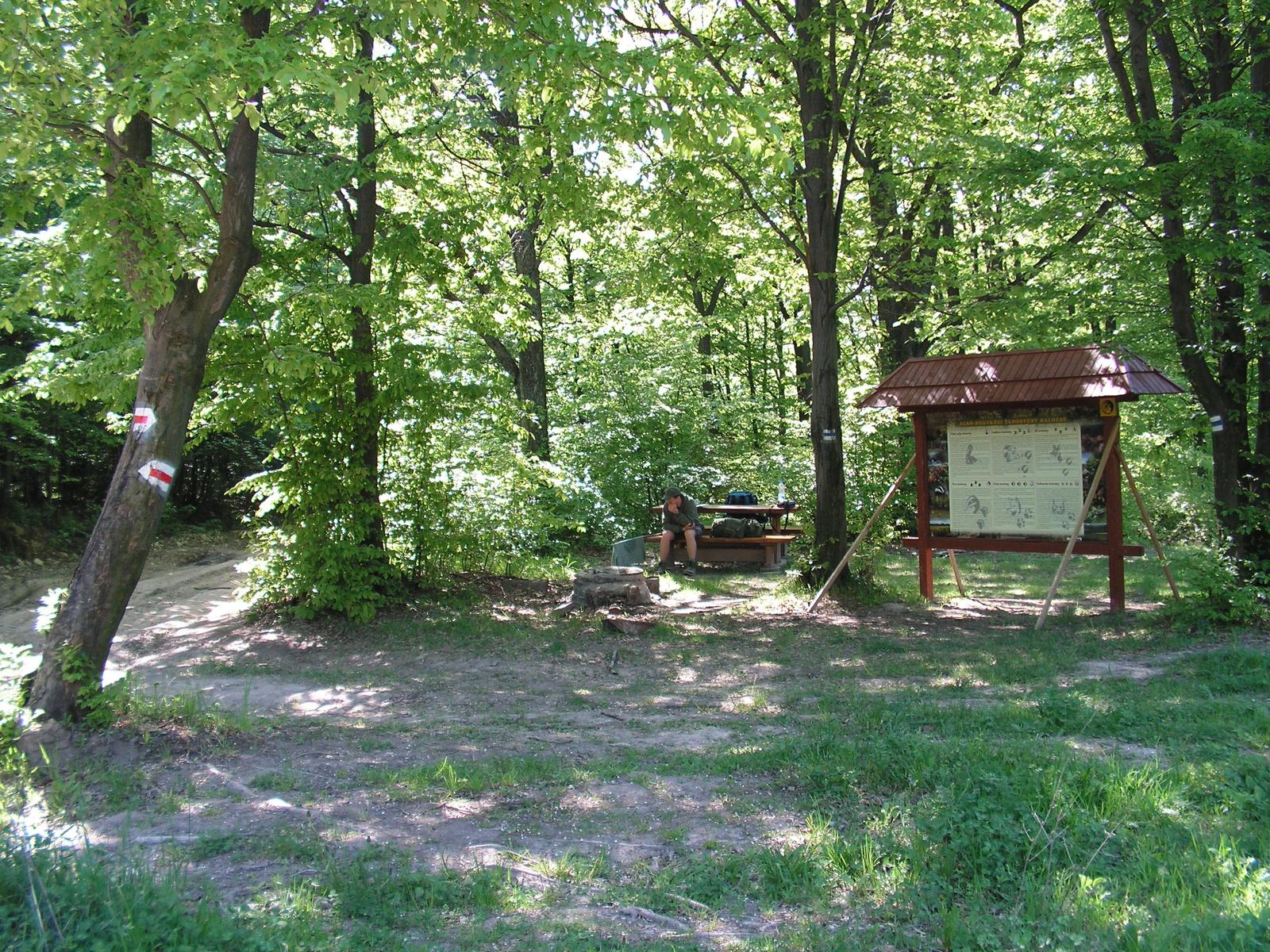 298 Cserép-tó, pihenőhely az erdei utak csomópontjában